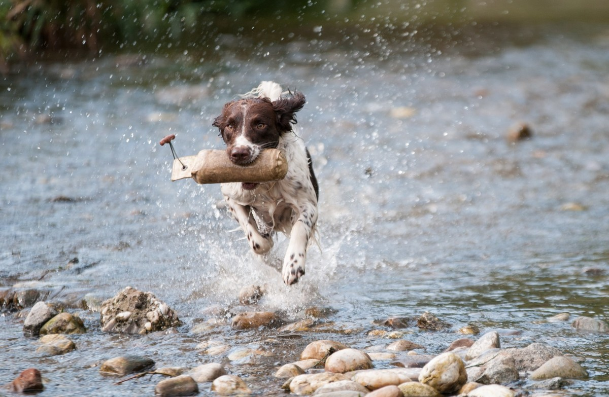 Dog Friendly Holiday In Perthshire