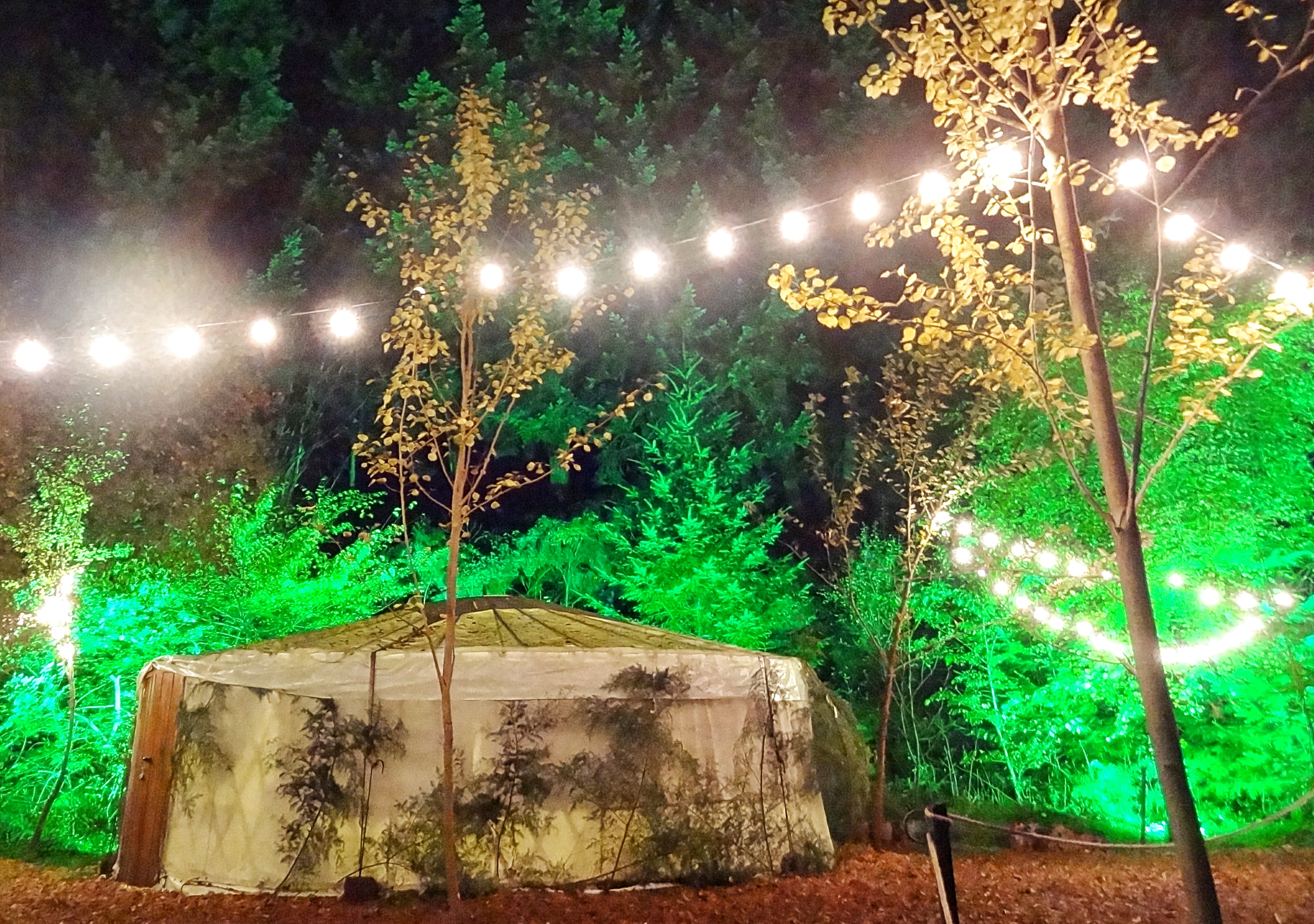Enchanted Forrest Light Festival